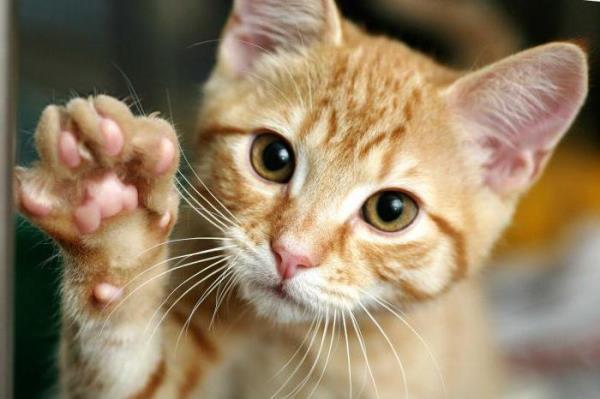 Котенок может шипеть на людей, если вырос на улице