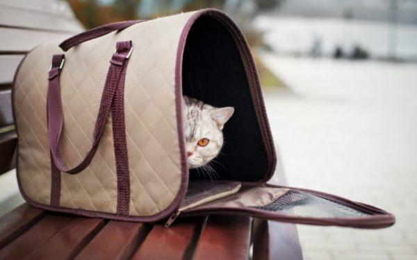 Внешне такая переноска напоминает дамскую или дорожную сумку
