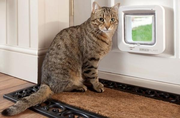 Дверца поможет коту выходить на улицу без помощи хозяев
