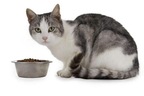 При запоре кошке лучше давать продукты способствующие пищеварению