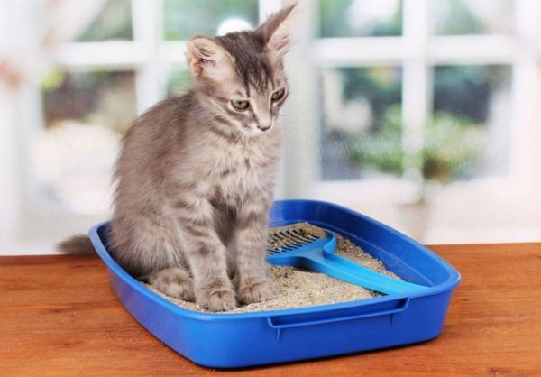 При появлении крови в моче у кота необходимо определить причину