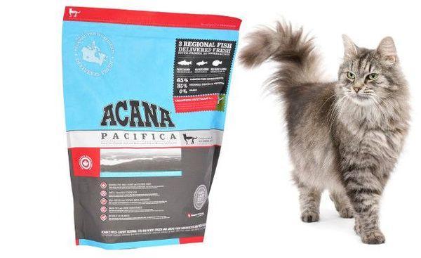 «Акана» подходит для кошек любого возраста