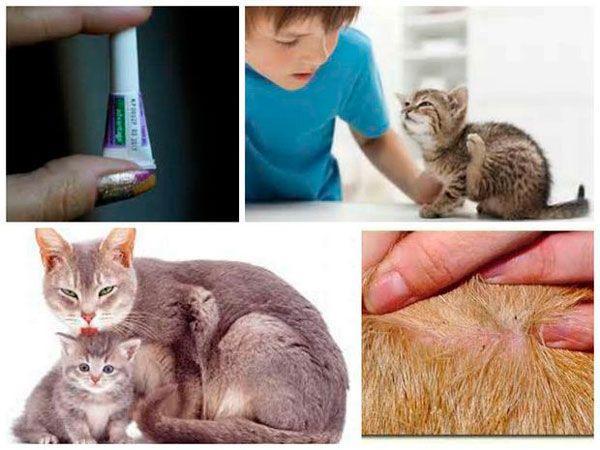 Капли «Барс» для кошек