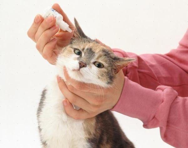 Ушные капли закапываются после чистки ушей