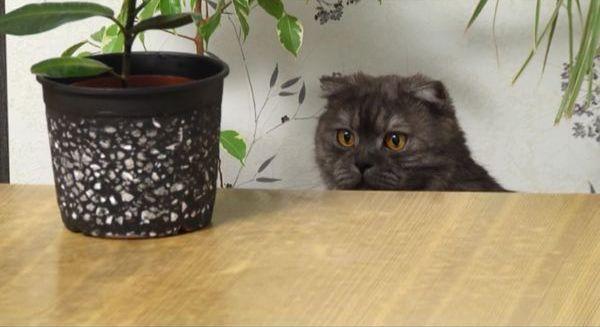 Горшки можно убрать с поля зрения кошек