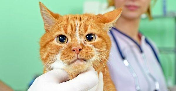 При первых симптомах экземы покажите питомца ветеринару