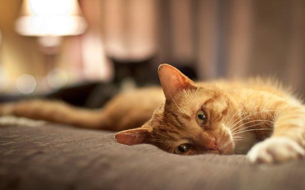 Кошке нужно подобрать запоминающуюся кличку
