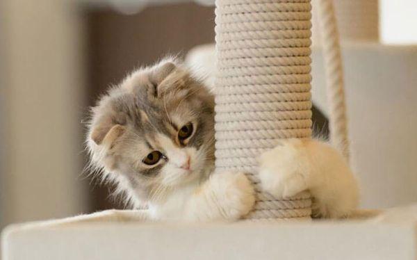 Домашние кошки любят поточить свои когти
