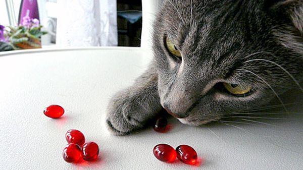Профилактические лакомства для кошки