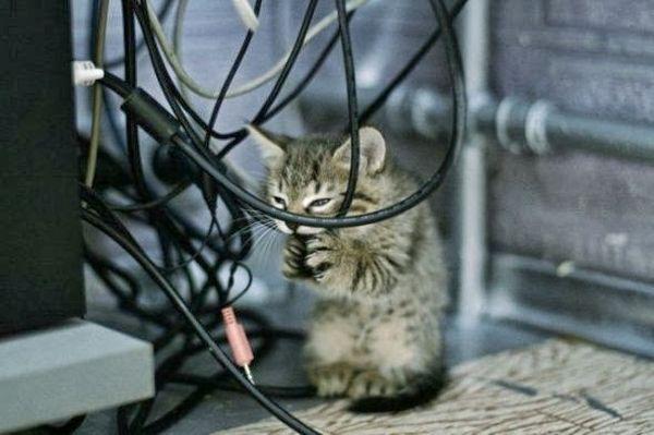 Котята часто грызут провода когда режутся зубы