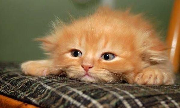 Котенка часто называют по окраске