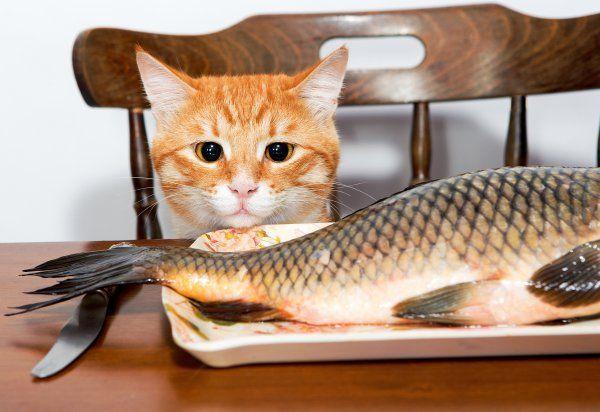 Речные представители часто заражены паразитами