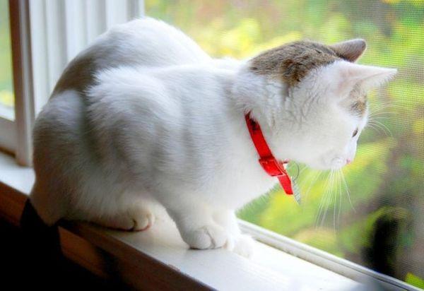 Кошка с декоративным ошейником