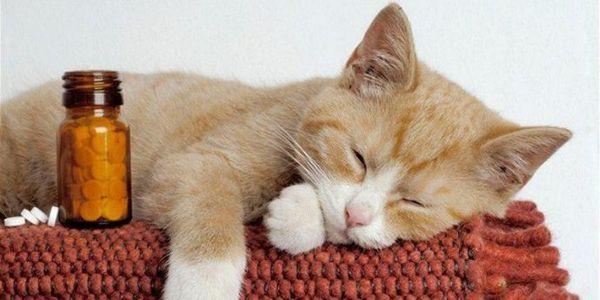 Давайте таблетки кошке только после прочтения инструкции