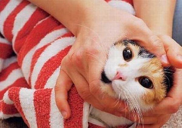 Заверните кошку в одеяло и дайте таблетку