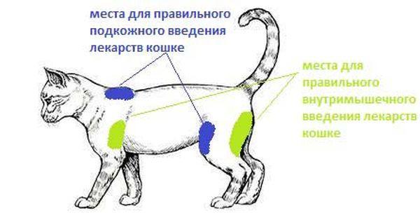 Как правильно колоть кошку