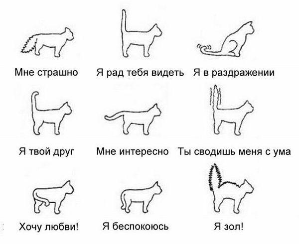 Как распознать эмоции кошки