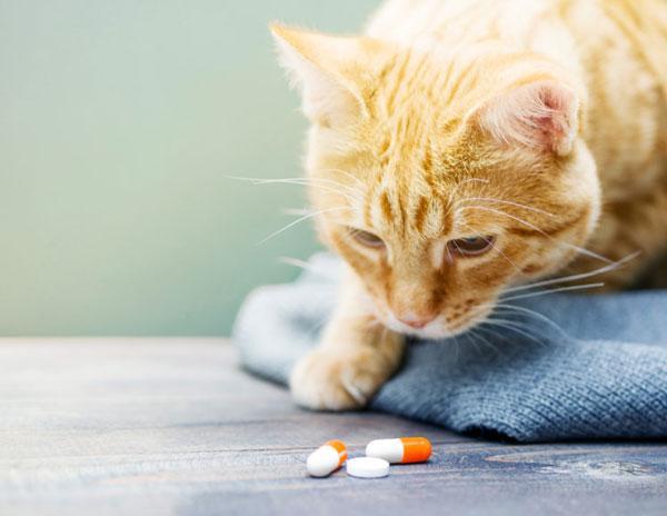 Антибиотики помогают вылечить заболевание в короткие сроки