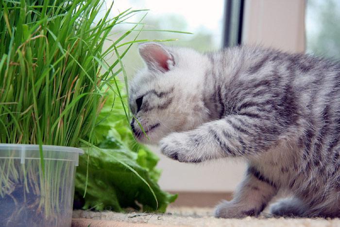 Подрастающий организм нуждается в дополнительных витаминах