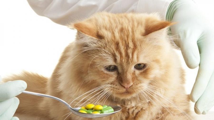 Витаминных добавок должно быть в меру