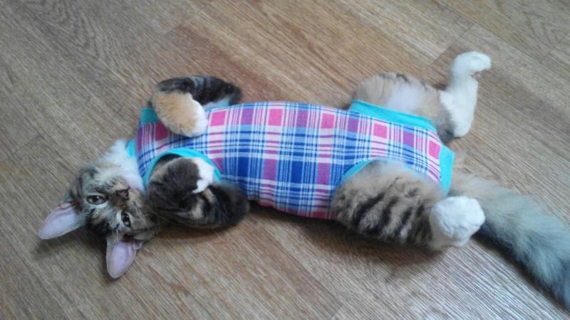 Попону для кошки сошьет даже новичок