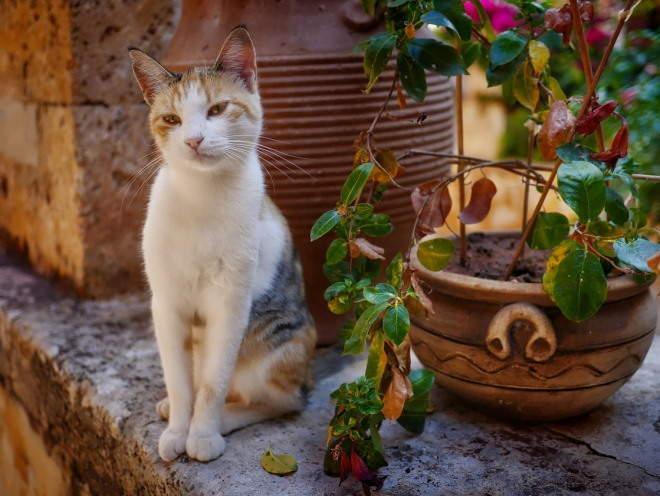 Коты любят цветочные горшки вне зависимости от возраста