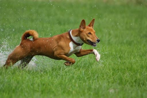 Животные отличаются любопытством и активностью