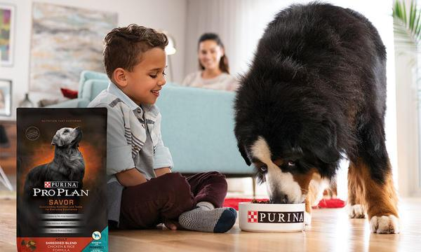 Корм «Проплан» для собак